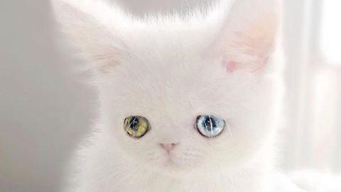 Földöntúli szemei vannak ennek a cuki cicának