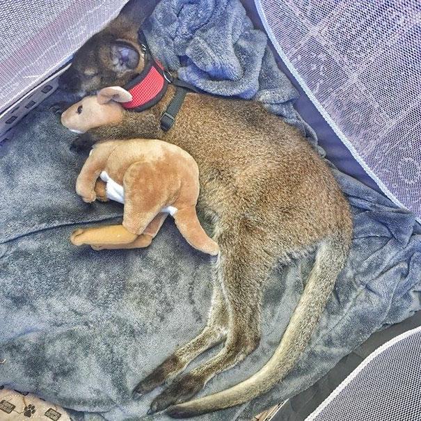 15 cuki kép, ami bebizonyítja, hogy az állatoknak is kell egy szőrös alvótárs