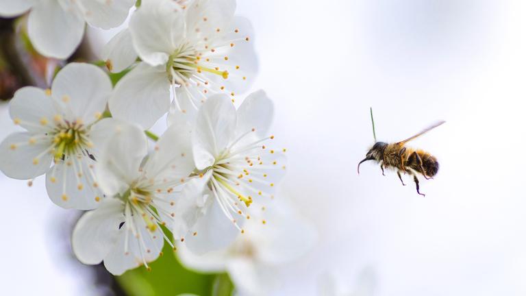 Szorgalmasan mézet készít, gyermekünknek jövőt épít
