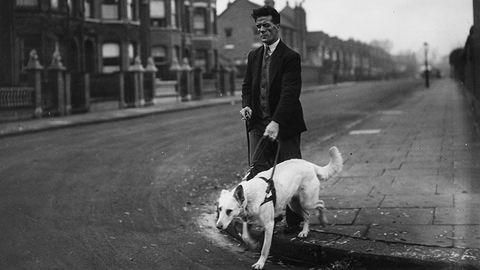 Vakvezető kutyák, a szeretetbe csomagolt segítők