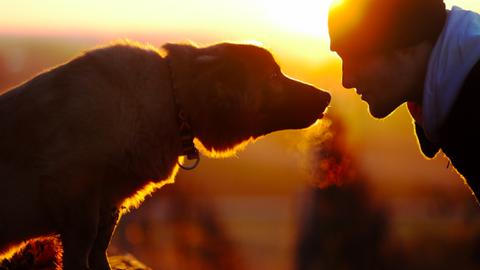 Itt a nagy kutyahoroszkóp! – 1. rész