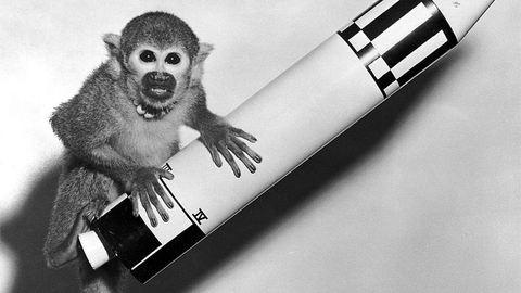 Dolly, Koko, Miss Baker és Lajka: ma van a kísérleti állatok világnapja