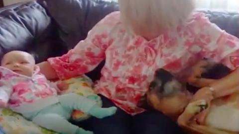 Ez a kutya mindent megtesz hogy ő maradjon a gyerek a családban - vicces videó
