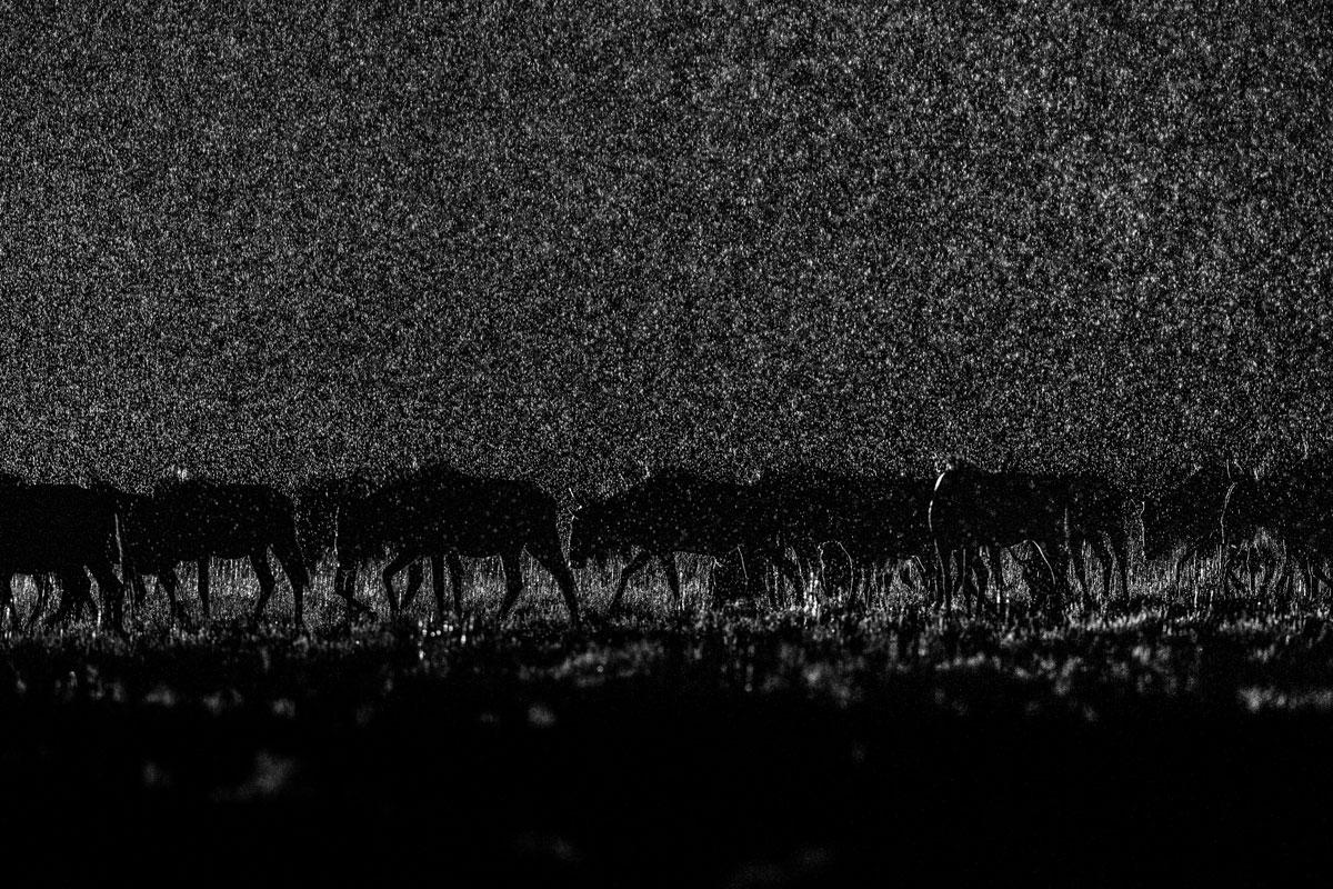 Természet kategória első díj - Will Burrard-Lucas/Sony World Photography Awards