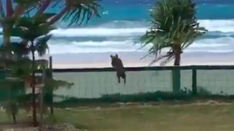 Vicces videó: a labdázás kedvéért még repülni is megtanult a lelkes kutya