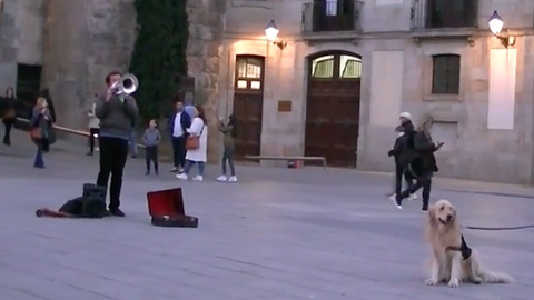 Az örökkévalóságig elhallgatná az utcazenét az érzékeny kutya – cuki videó