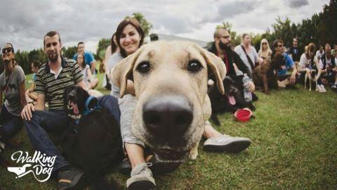 Május elsején is kutyáznál? Mit szólsz egy kutyás piknikhez?