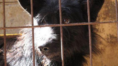 1 éve nincs áram a törökszentmiklósi állatmenhelyen