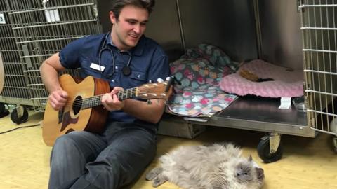 Minden betegének énekel műtét előtt a szupercuki állatorvos