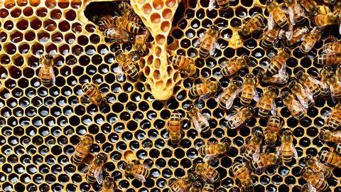Méz csurgott az utasokra Szegeden