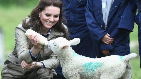 Ennek a cuki báránynak mindegy, hogy maga Katalin hercegné eteti meg