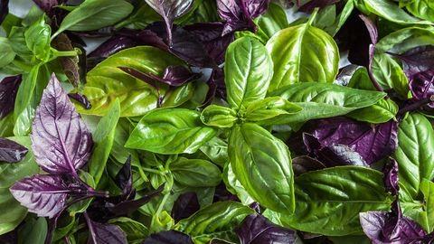5 növény, amiről nem is gondoltad, hogy segíthet a hajápolásban