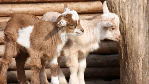 8 hihetetlen tény, amit tutira nem tudtál az állatokról
