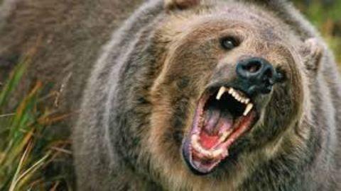 A szívbajt hozta a medve a két kerékpárosra