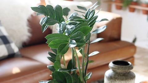 7 trendingelő szobanövény, amellyel most nem lőhetsz mellé