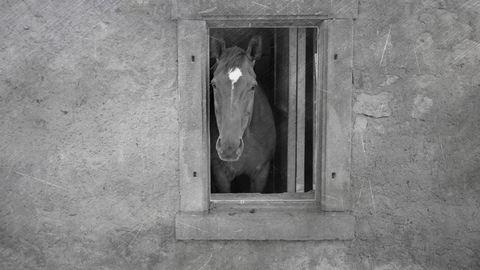 Így került egy ló a nagymamám fürdőszobájába - háború utáni történetek