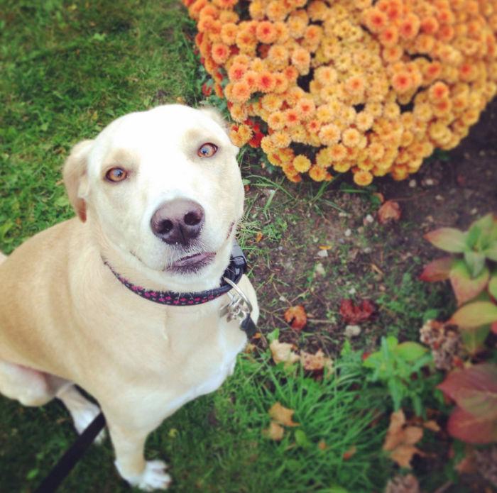 Újra menhelyre került a világ legszomorúbb kutyája
