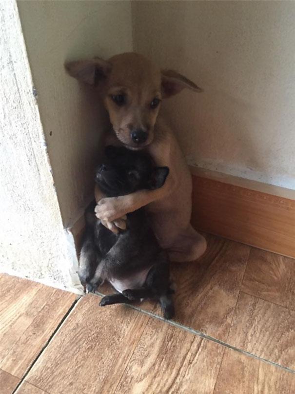 Folyamatosan öleli egymást ezt a két kóbor kiskutya