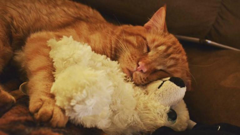 Otthonra lelt a világ legszomorúbb cicája