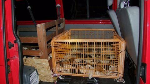 54 kiskutyát zsúfolt az autójába