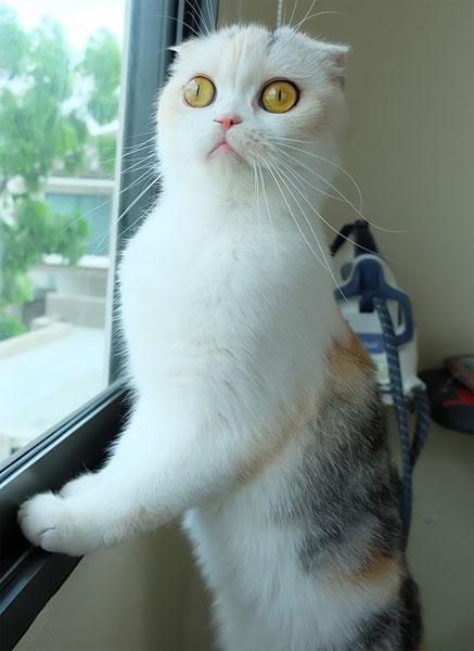 Szerkesztőségünk álláspontja ennek a macskának az arcára van írva (Fotó: Tumblr)