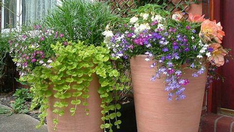 Konténeres kertészkedés: ezeket a tanácsokat fogadd meg!