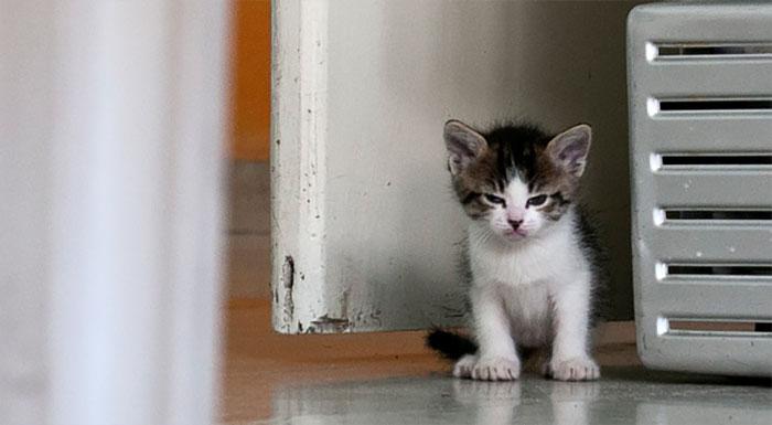 10 kiscica, akit nagyon, de nagyon feldühítettek