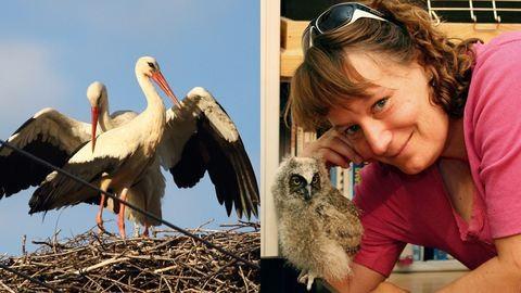 Bemutatjuk Telegdi Ágnest, akinek még a postaládájában is madarak laknak