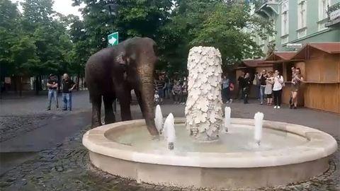 Elefánt fürdik Gyöngyös főterén – videó