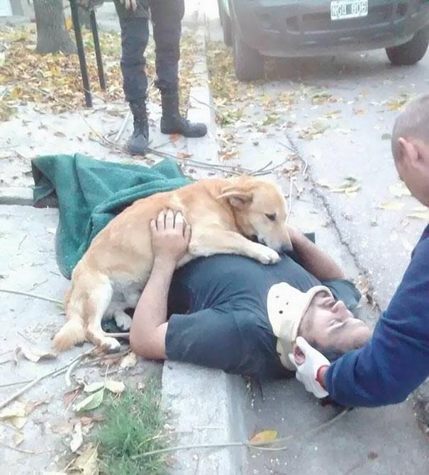 Nem mozdult el balesetett szenvedett gazdája mellől a hűséges kutya