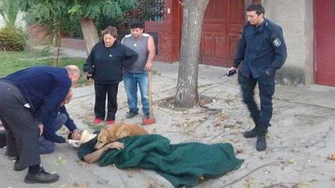 Nem mozdult a hűséges kutya sérült gazdája mellől