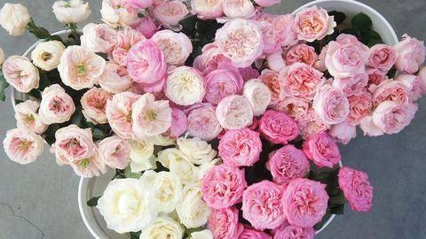5 virág, amely legalább olyan szép, mint a bazsarózsa