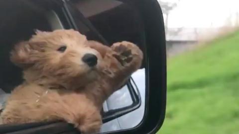 A cuki kutyának lételeme a száguldás – videó