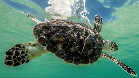 1175 teknőst mentettek meg Dubaiban