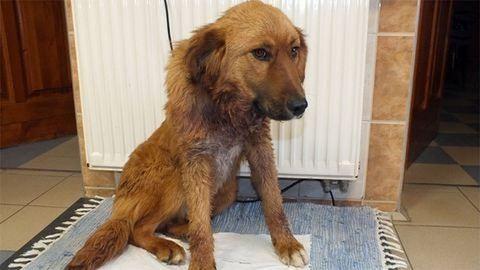 Két év börtönt kapott a férfi, aki elvágta kutyája nyakát