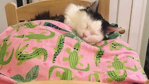 Saját babaágyat kapott a mentett cica