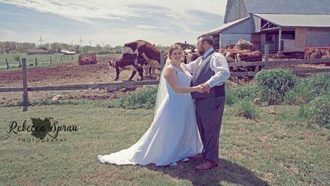 Szerelmes tehenek trollkodták szét az esküvői fotózást