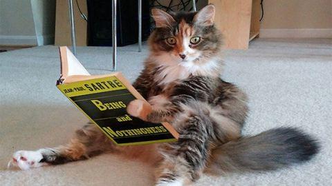 10 macska, amely gyanúsan furcsán viselkedik