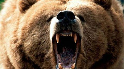 Cirkuszi medve támadt a közönségre Tiszafejéregyházán