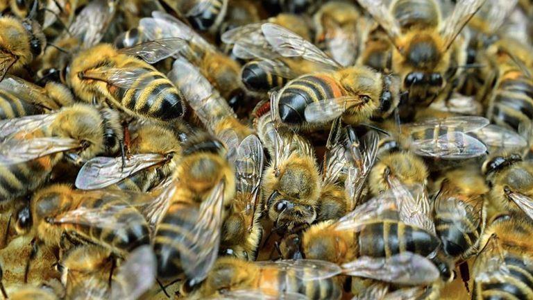 Megvadult méhraj riogatott a gyereknapon