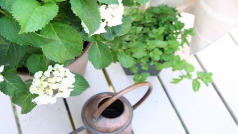 8 növény, amivel természetesen távol tarthatod a szúnyogokat