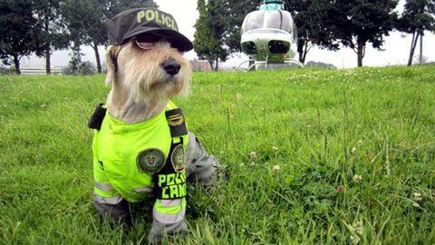 A rendőrségnél kapott állást a kóbor kutya