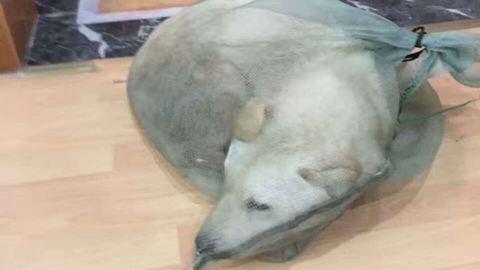 Jóindulatú idegen mentette meg a húsként árult kutyát