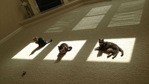 Ez a 10 macska bármikor áldozna a Napisten oltárán