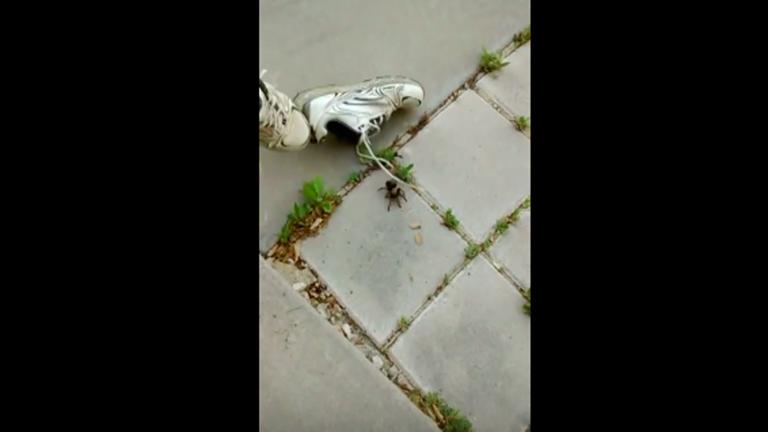A cipődben bármi lehet, mostantól hordj szandált! – videó