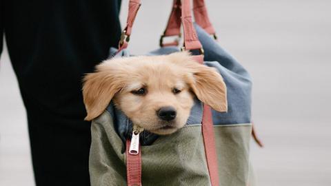 10 fotó, ami bebizonyítja, hogy a kutyák túl jók a gyalogláshoz