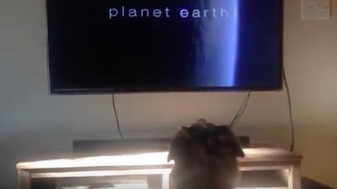 Ez a kutya mindennél jobban szeret tévézni – videó