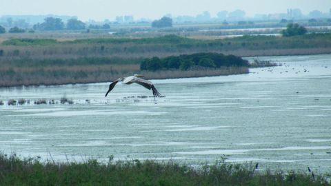 Nem mindennapi látvány: pelikán költözött a Hortobágyra