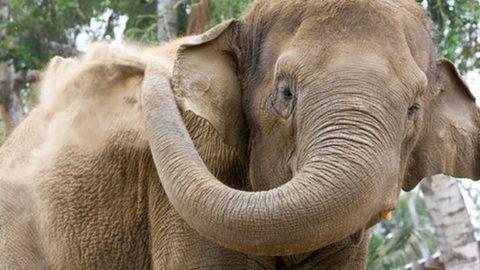 Benézett az újpalotai benzinkúthoz egy elefánt – videó