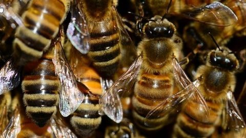 Elszabadultak méhek a 74-esen, áll a forgalom